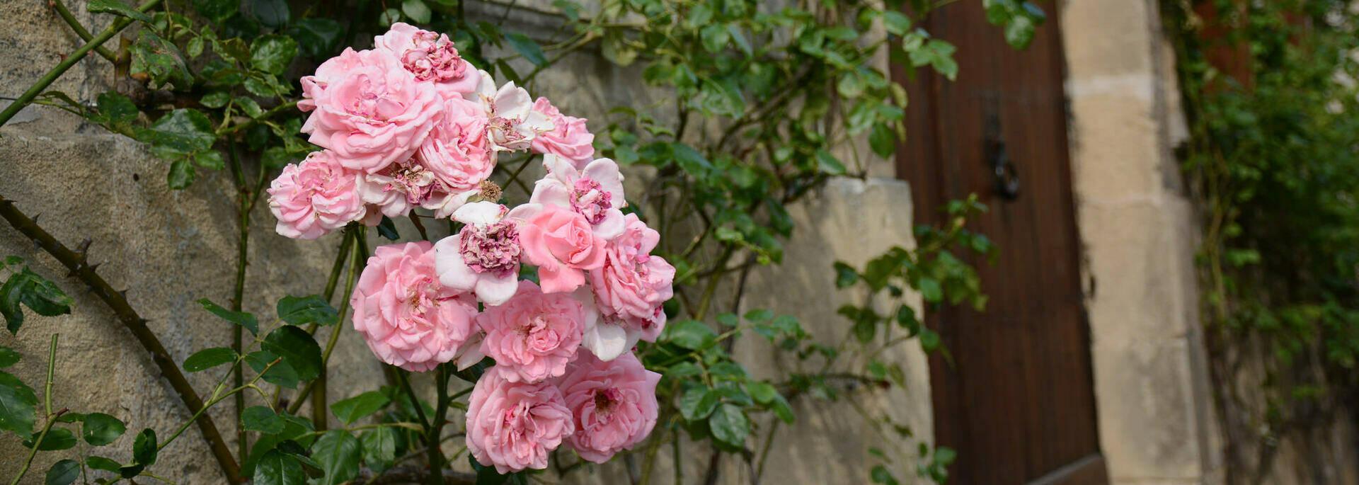 Rue médiévale fleurie
